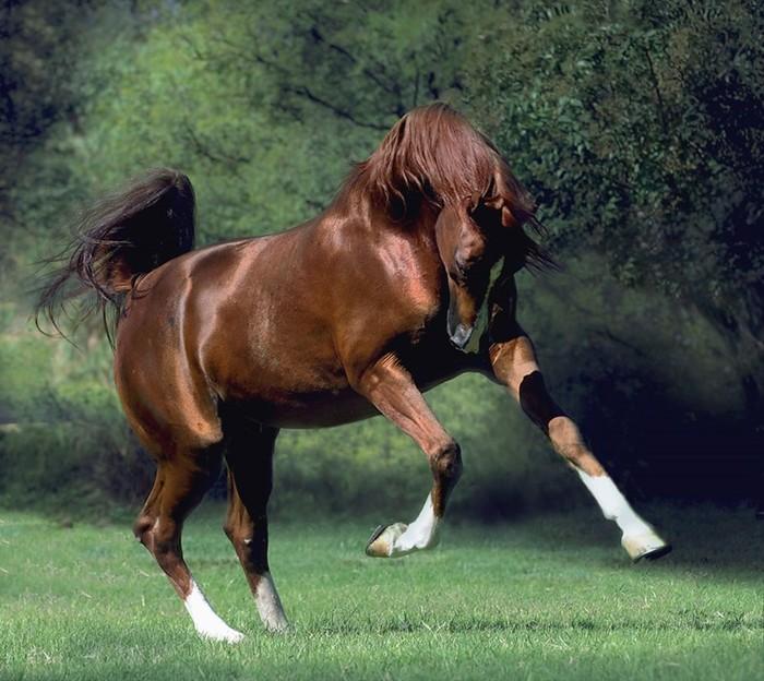 Красивые снимки лошадей! Фотограф Ronceval