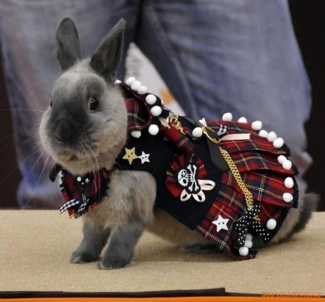 Модная одежда для кроликов   конкурс в Йокогаме