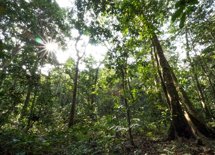 В каких странах самые большие запасы древесины