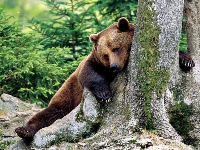 Японские пенсионеры каратисты избивают медведей