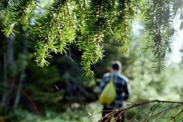 Какие деревья помогают выжить в лесу