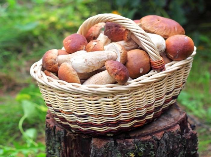 Почему белые грибы считаются лучшими
