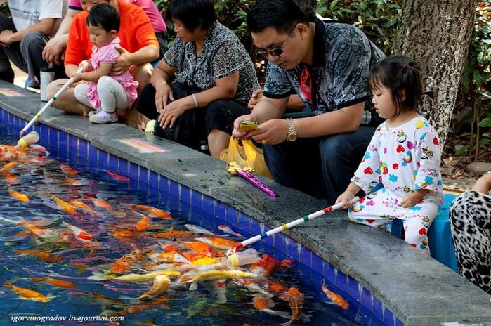 Развлечение по китайски   для детей и взрослых!