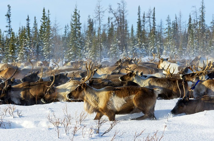Животные, путешествующие группами