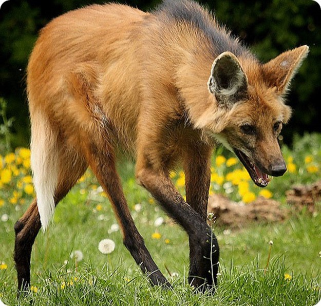 Странные и редкие животные нашей планеты