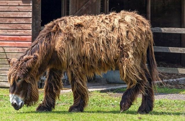 Удивительные животные гибриды