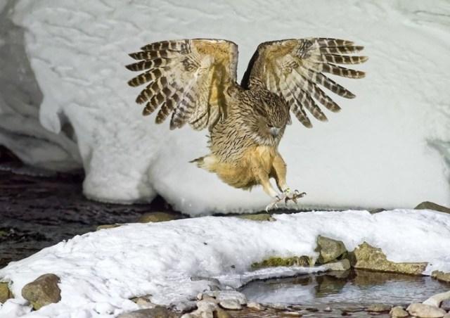 Английский конкурс макроснимков и животного мира