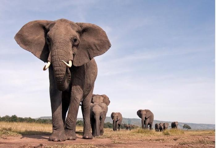 Животные, которые способны захватить мир