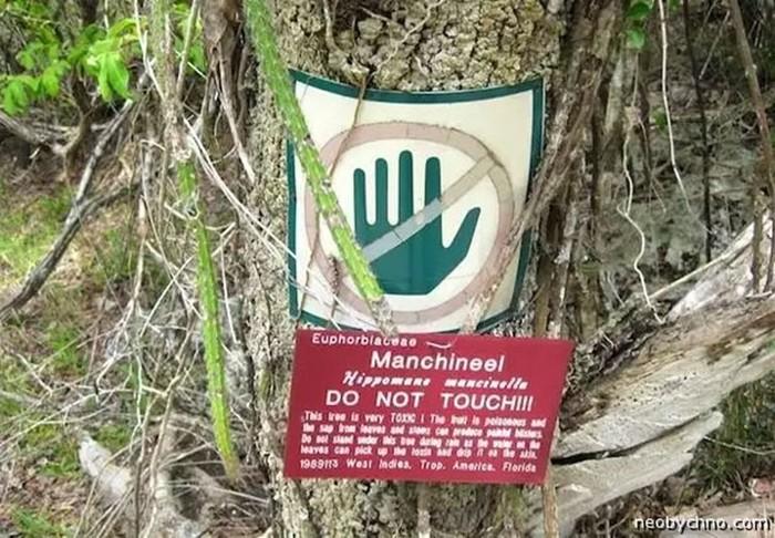 Самые ядовитые растения мира, которые убивают людей