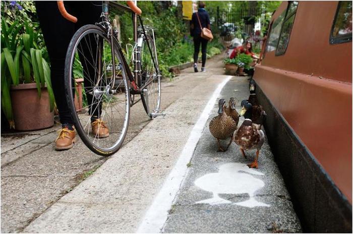 Специальные пешеходные дорожки для уток в Великобритании