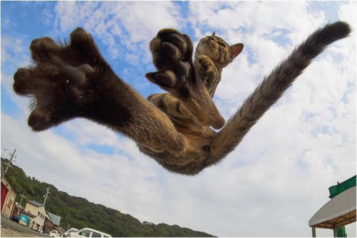 Кунг фу кошки на снимках японского фотографа