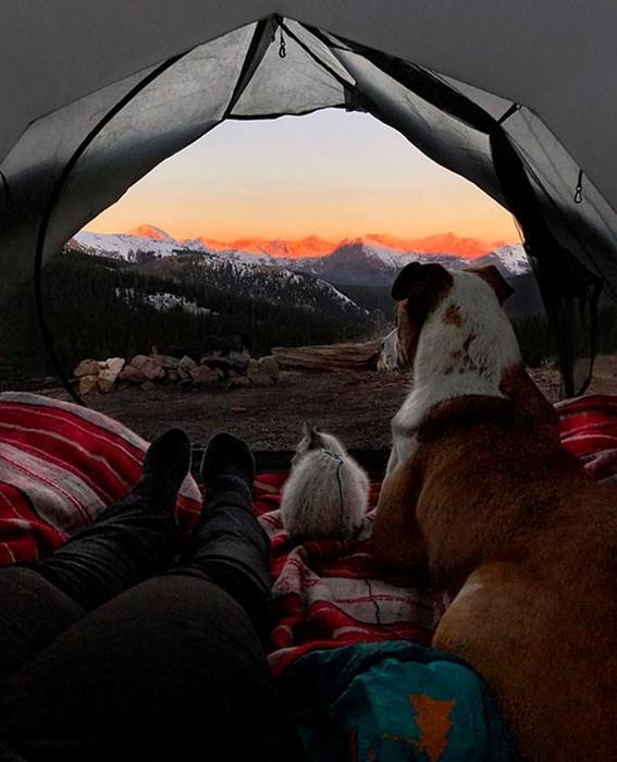 Пес и кот, которые путешествуют с хозяевами