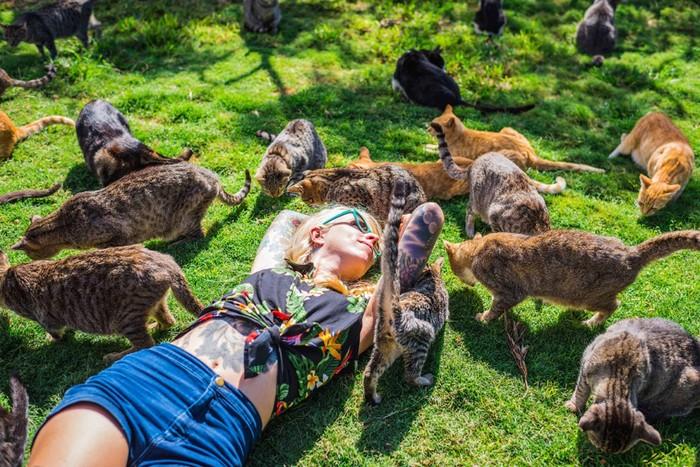 Кошачий рай на гавайском острове Ланаи