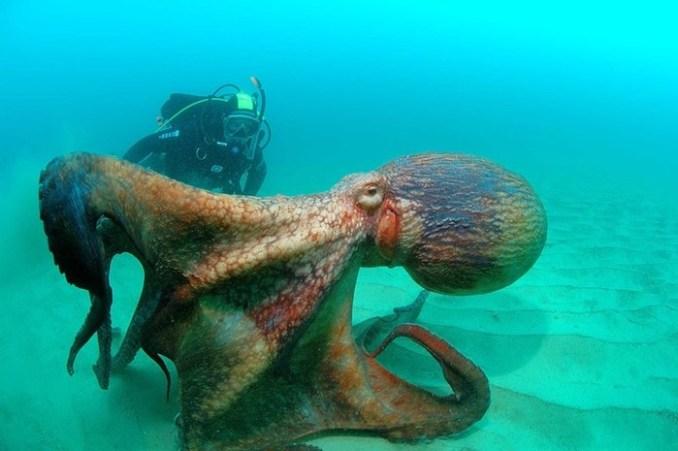 15 самых страшных тварей из морских глубин
