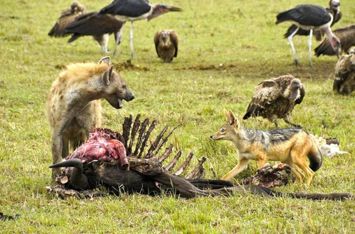 От какого животного самая ужасная смерть, рассказал эксперт