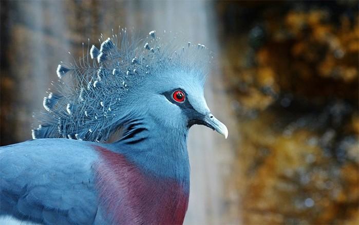 Как птица! Создаем красочную динамичную композицию в Photoshop