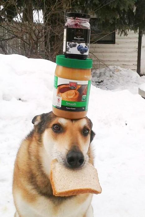 Искусство балансировки предметами демонстрирует пес Тоби