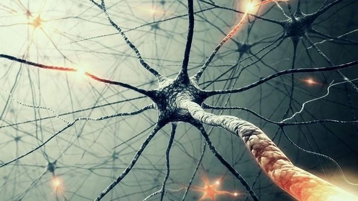 Нервные клетки восстанавливаются?