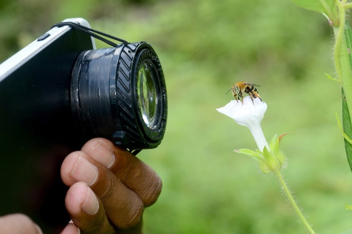 Макрофотографии, сделанные камерой смартфона