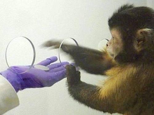 Деньги портят даже обезьян!