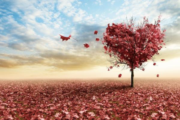 Воображение, мечты: Любовь все преувеличивает