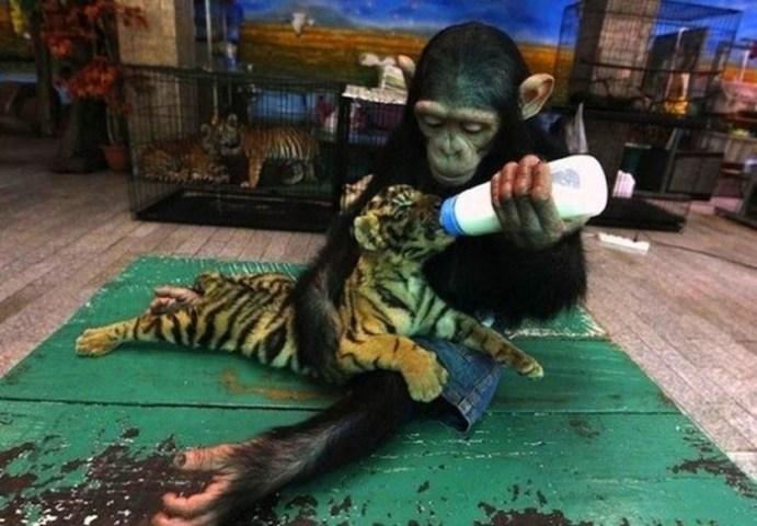 Зоопарки Китая— одна из самых интересных достопримечательностей Поднебесной