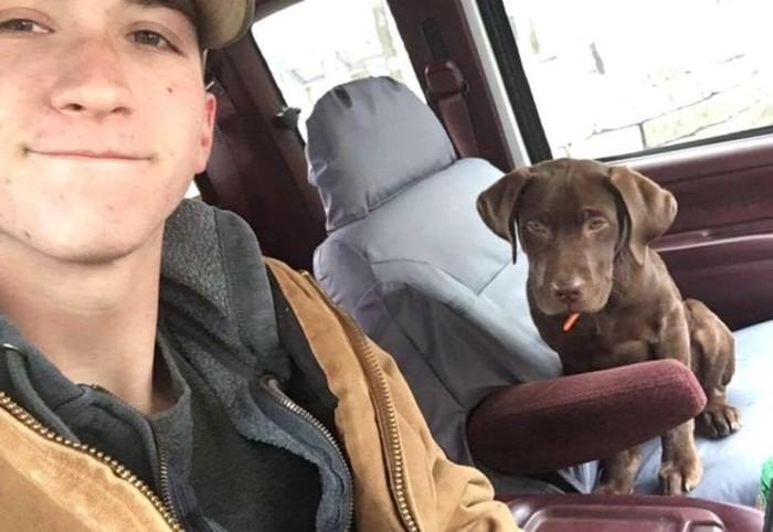 Интересная история, как собака спасла своего хозяина из болота