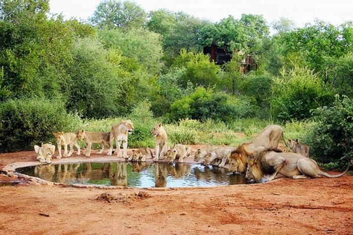 Самые длинные миграции животных