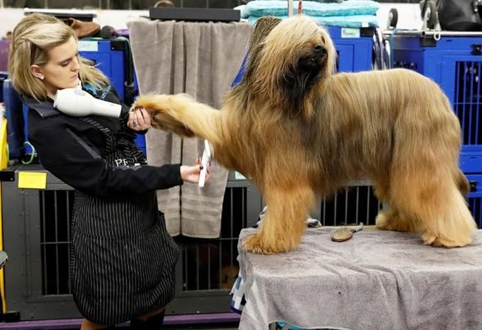 Westminster Kennel Club 2018— конкурс собачьей красоты
