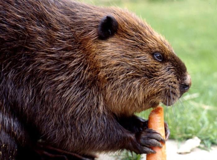 10 самых неадекватных животных на Земле
