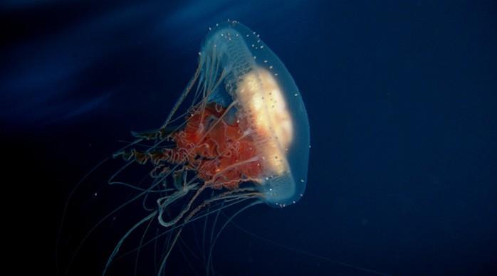 10 подводных существ с невероятными способностями