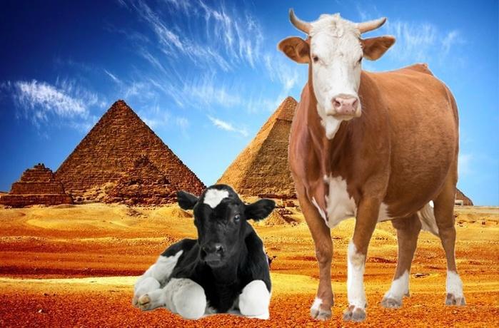 Мясная диета от фараона