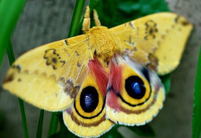 Как выглядят бабочки и их гусеницы