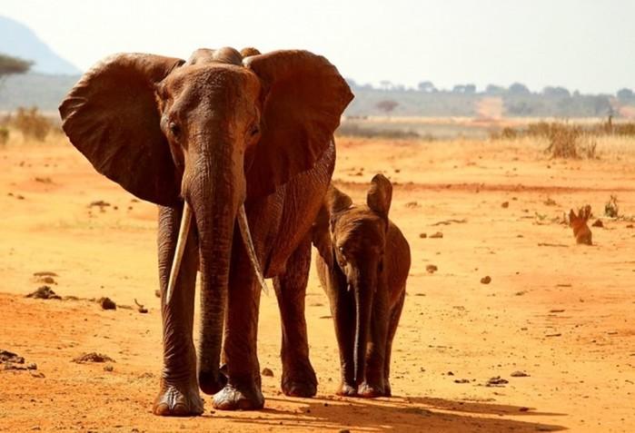 16 мифов об Африке, в которые многие до сих пор верят