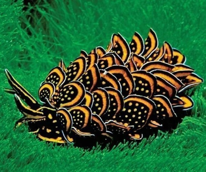 20 очень странных животных, обитающих на нашей планеты