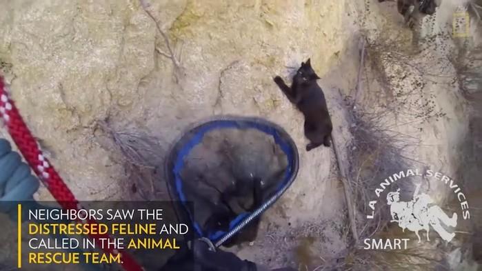 Шокирующие истории о котиках, которых спасали в странных местах