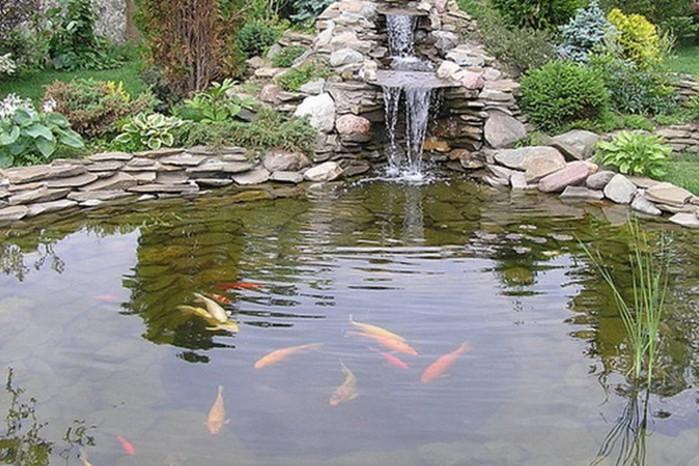 Как ухаживать за рыбками в садовом водоеме?