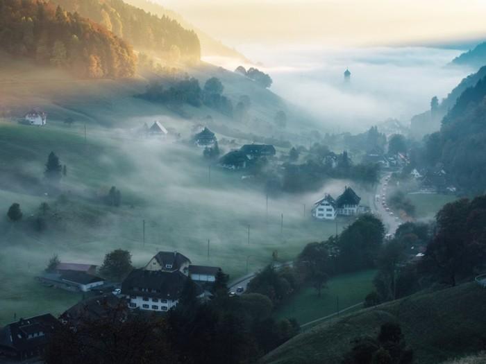 10 самых страшных лесов в мире