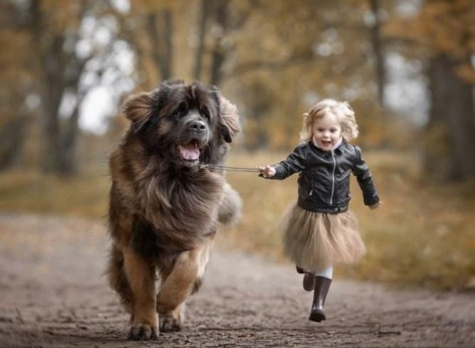 Ребенок просит собаку: что делать родителям