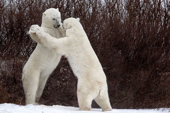 Эти забавные животные! Участники конкурса Comedy Wildlife Photo Awards