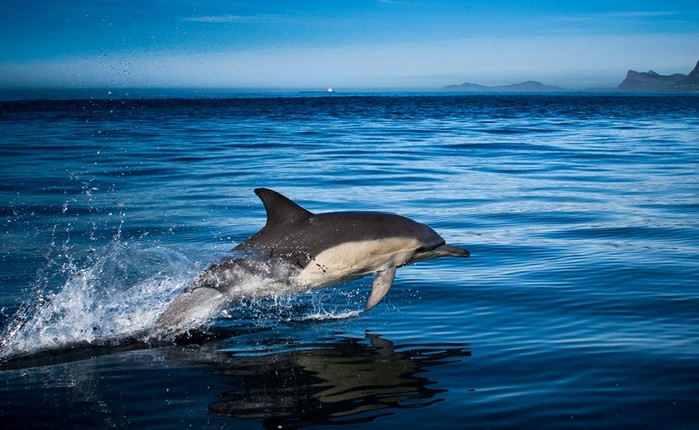 Ужасающие факты о дельфинах, которые разрушают позитивный образ этих животных