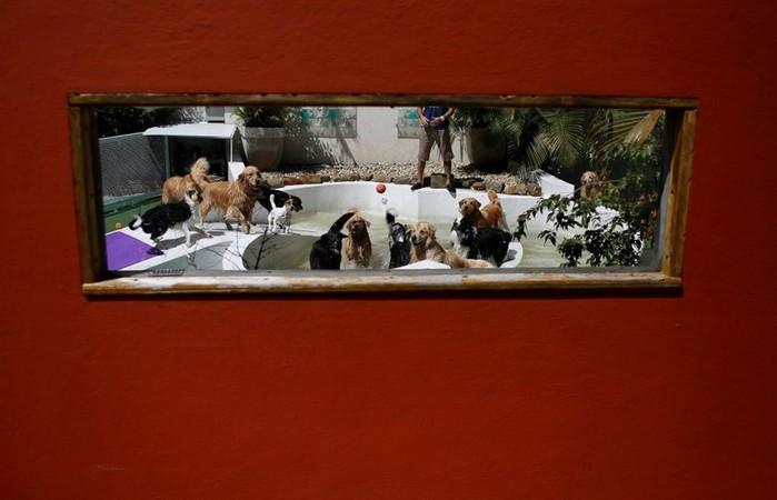 Детские сады для собак в Бразилии: чтобы домашние любимцы не скучали