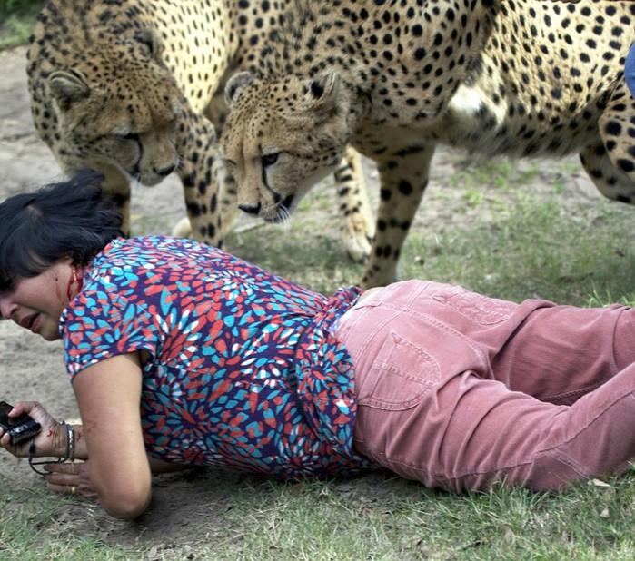 Когда животные атакуют: шокирующие факты и фотографии