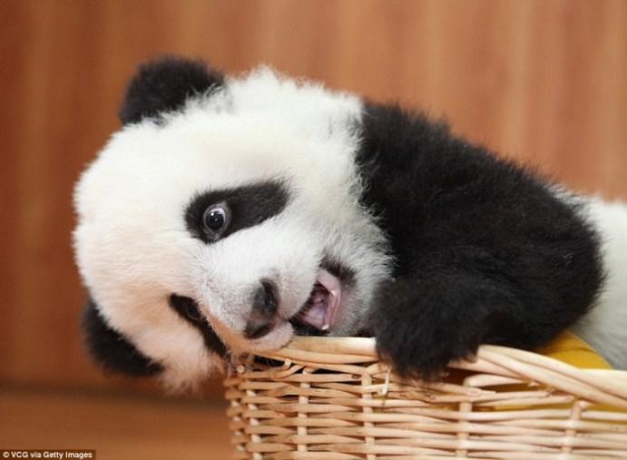 Невозможно сдержать улыбку! или Где обитают самые умилительные детёныши животных в мире