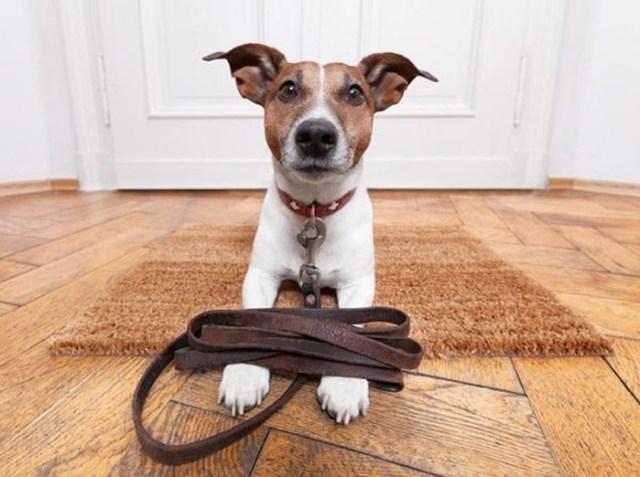 Защита дверей от домашних животных: когтеточки, вольеры и другие приспособления