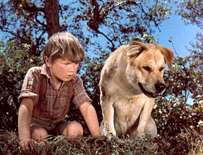 Топ 10 интересных фильмов о людях и животных