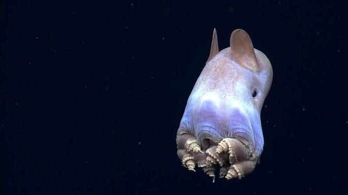 Самые таинственные создания глубин