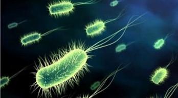Как появились бактерии? Результаты деятельности бактерий