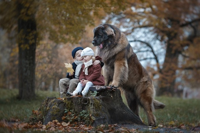 50 удивительных фактов о собаках
