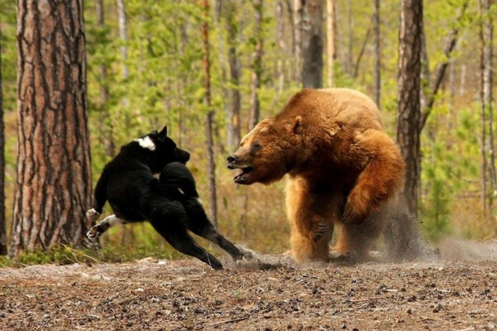 Удивительные факты о возможностях животных